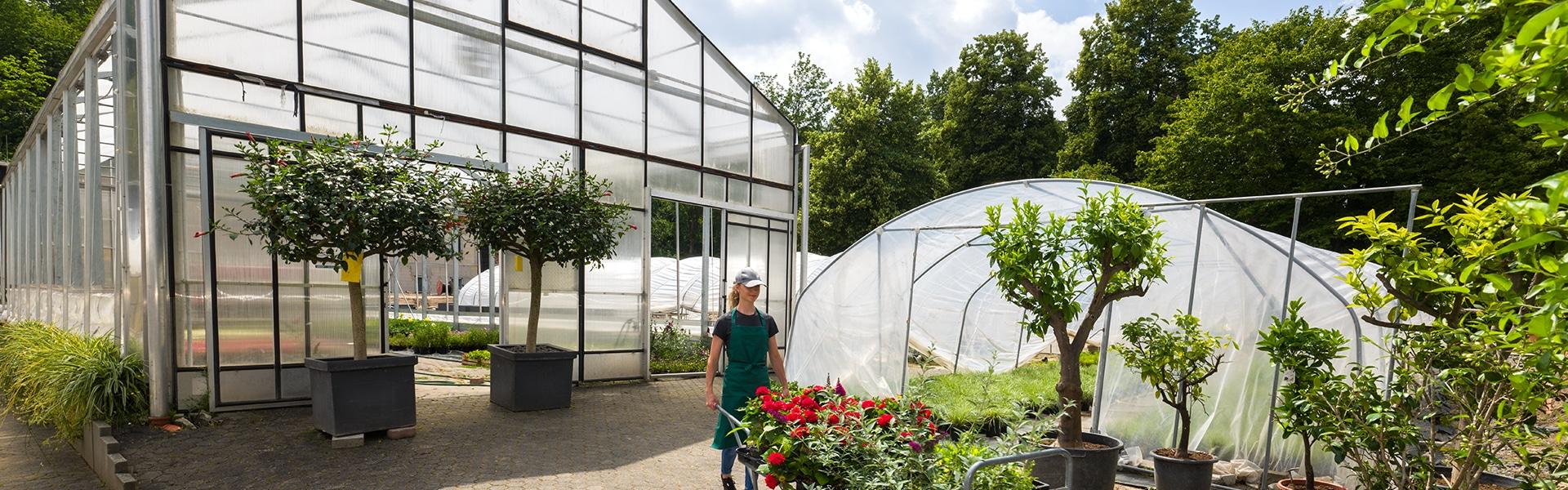 Foliengewächshaus und Gewächshaus mit Gärtnerin bei der Arbeit