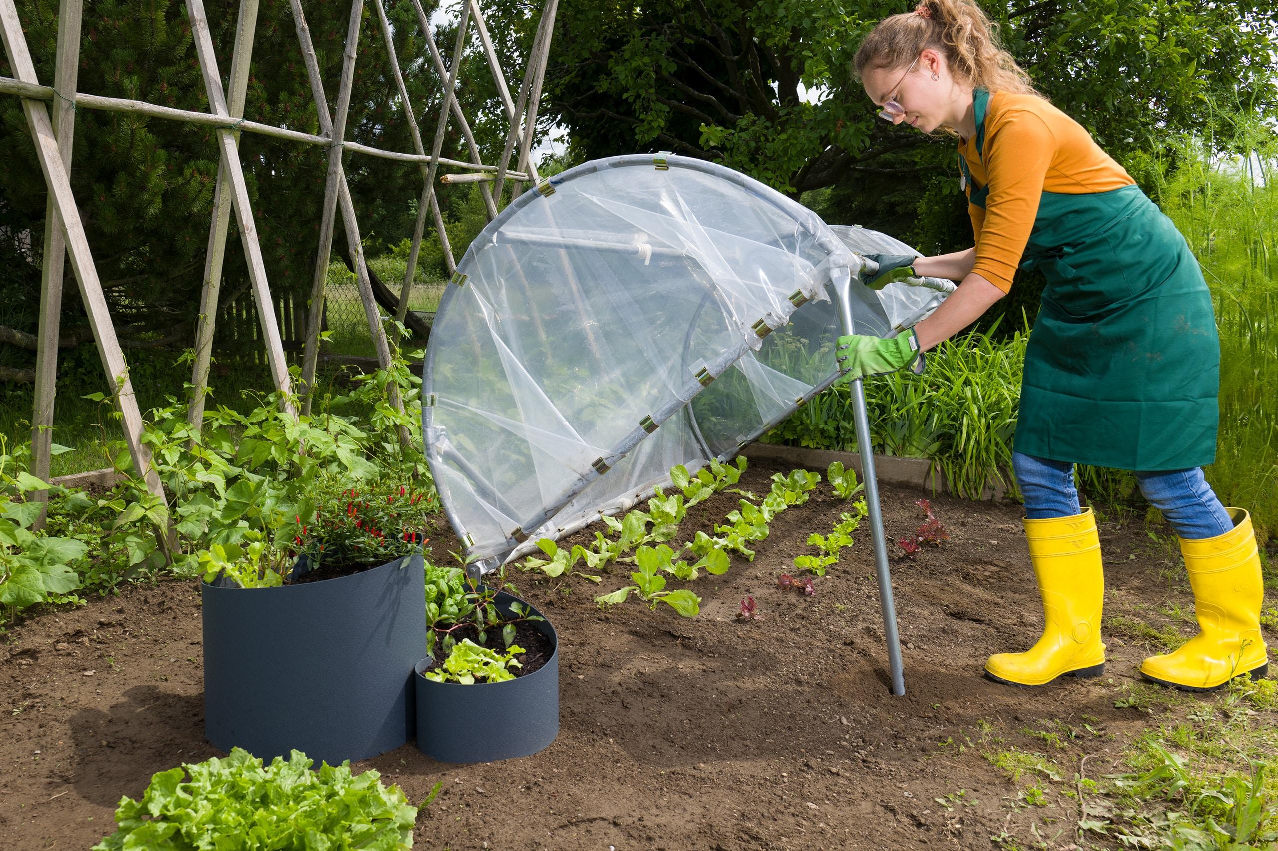 Frau stellt Frühbeet auf darunter wächst Salat