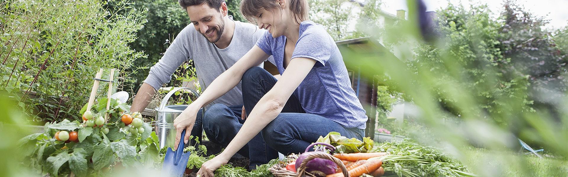 Römi Start Up Folientunnel Paar arbeitet im Gemüsegarten