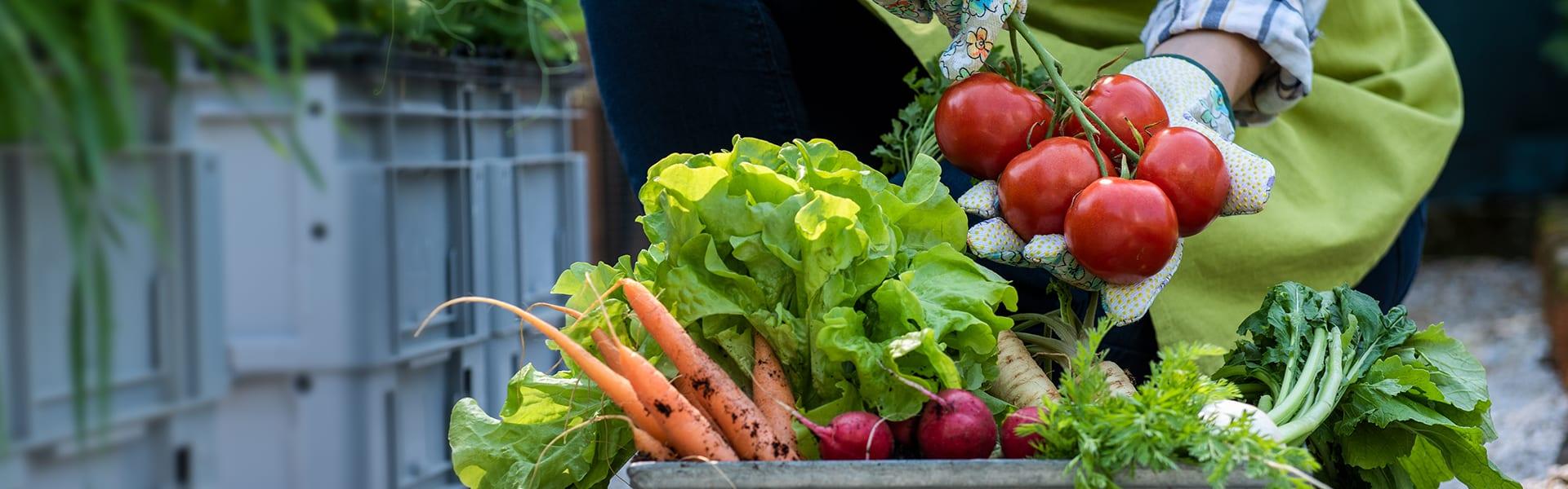 Hintergrundbild Römi Classic Gemüseanbau verschiedene Sorten Gemüse